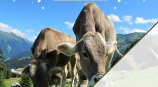 Aparat de muls vaci - cu si despre aparate de muls