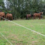 Beneficiile folosirii unui gard electric in zootehnie